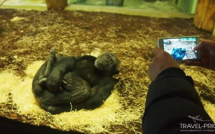 Зоопарк в Берлине: цены, карты, звери