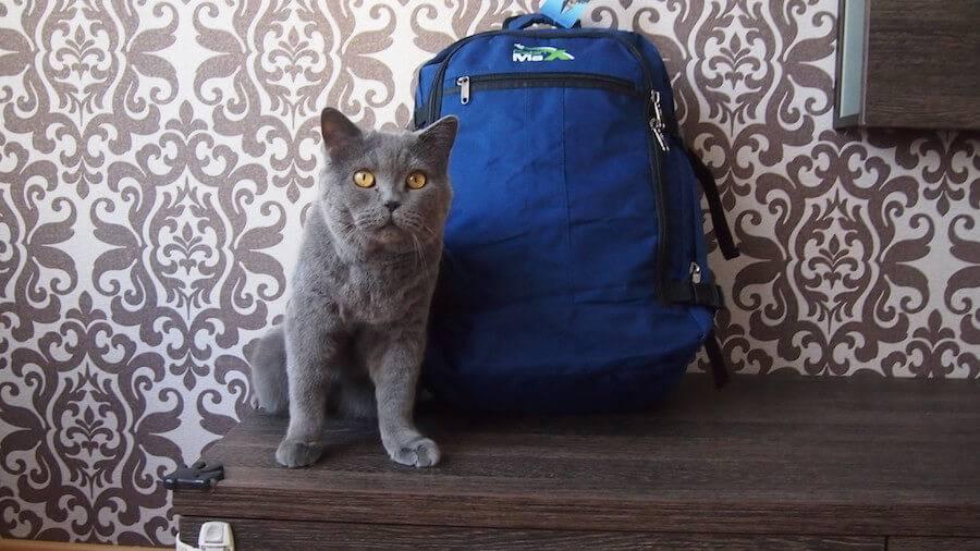 выбор рюкзака для ручной клади