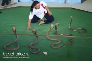 Змеиная ферма Паттайя