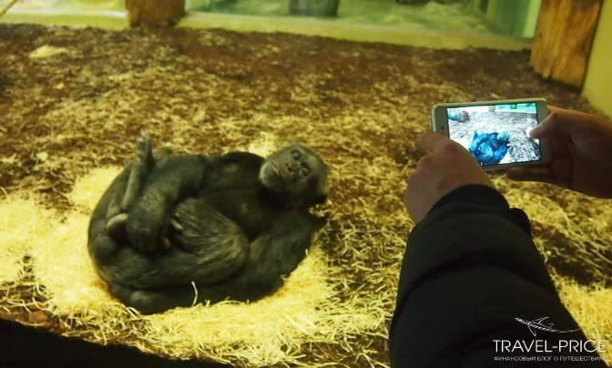 зоопарк берлина карта цены звери