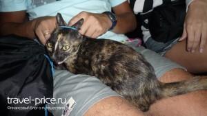 Кот из Siam Clinic. Панган, Таиланд